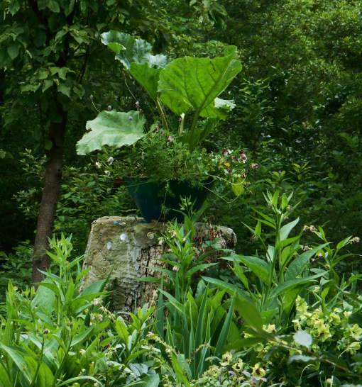 Rhubarb commands attention in this large pot on our 'pedestal.'