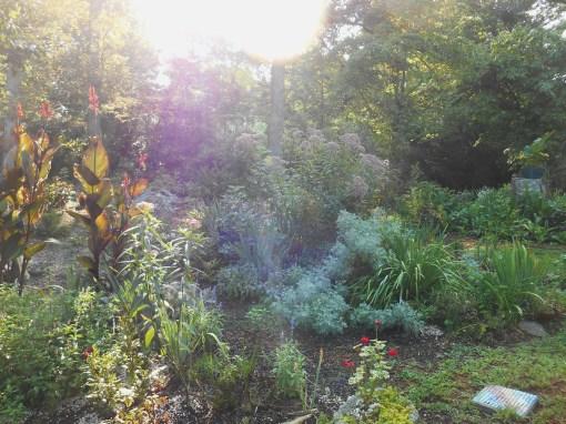 July 27, 2016 morning garden 006