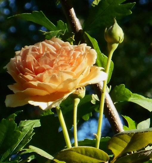 August 13, 2016 morning garden 073