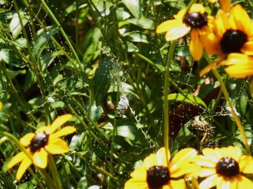 August 26, 2016 spider 005