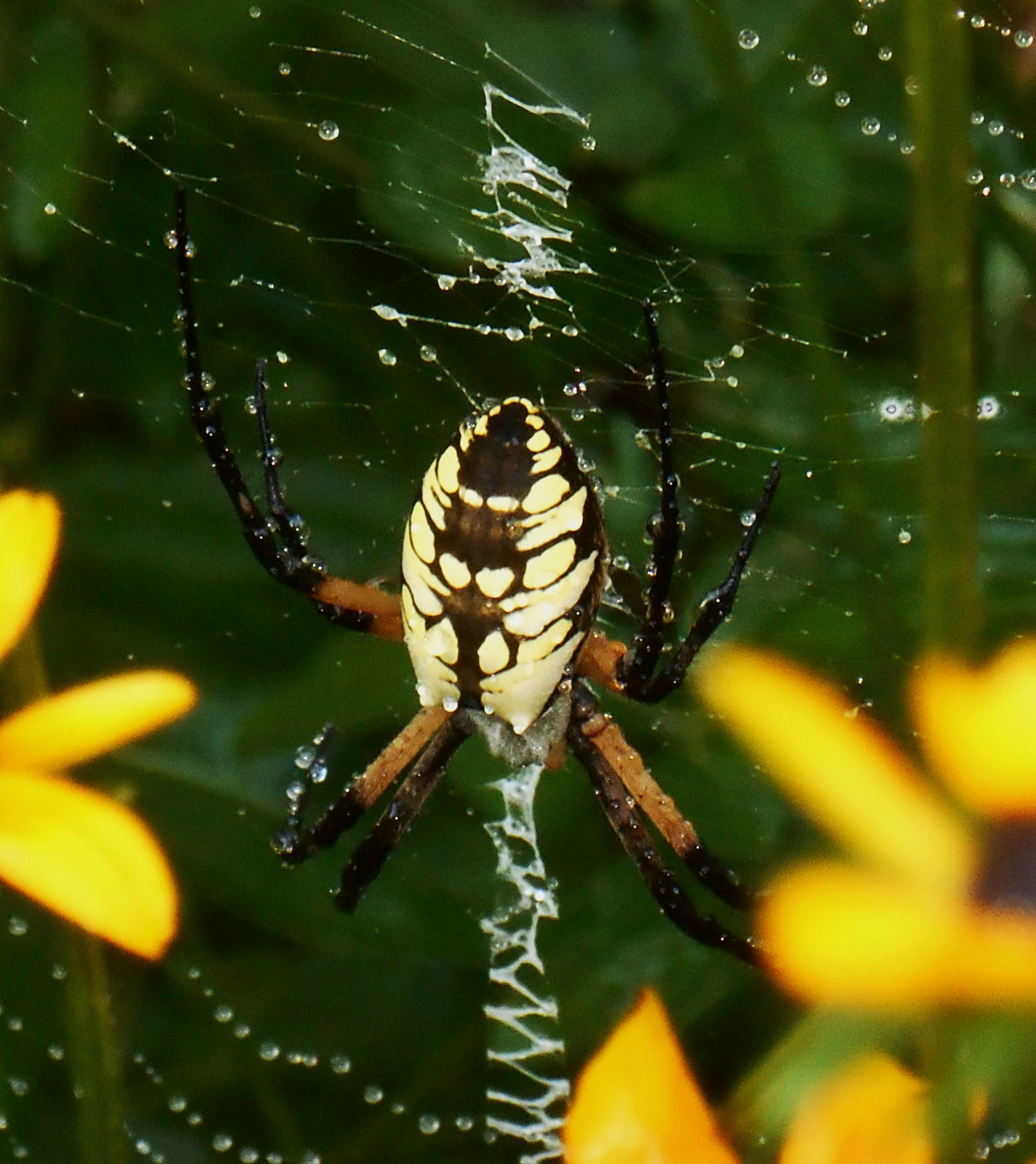 August 28, 2016 spider 003