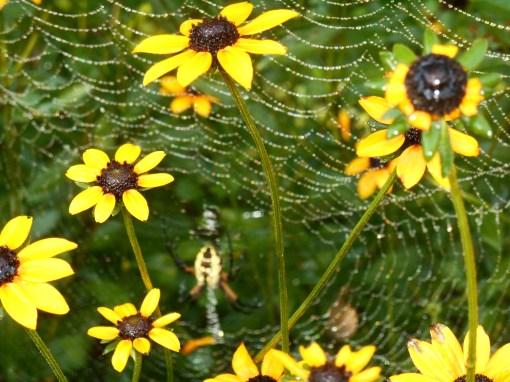 August 28, 2016 spider 006