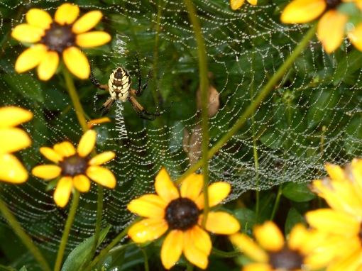 August 28, 2016 spider 008