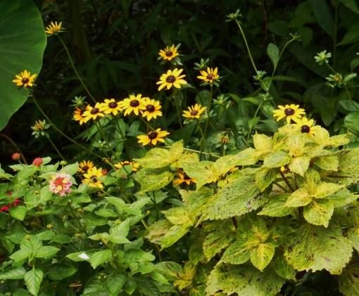 August 8, 2016 garden in rain 002
