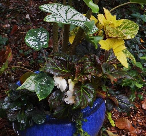 August 8, 2016 garden in rain 005