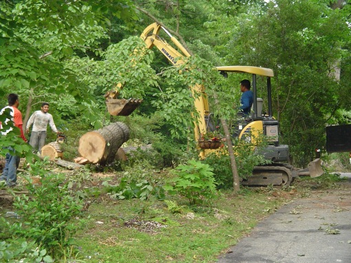 June 16, 2013 tree clearing 018
