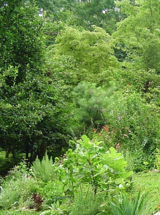 July 11 2013 garden 011