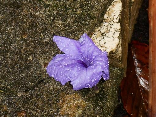 september-20-2016-garden-in-rain-003