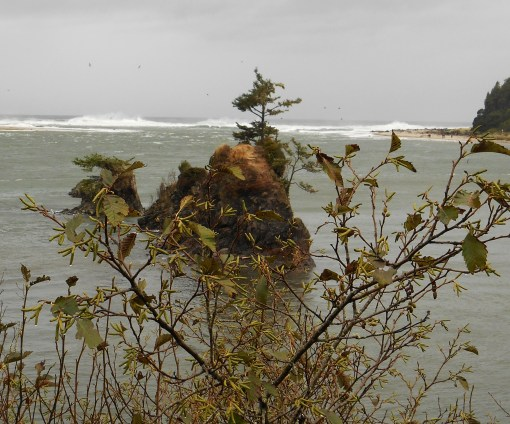 These three photos from Siletz Bay, OR
