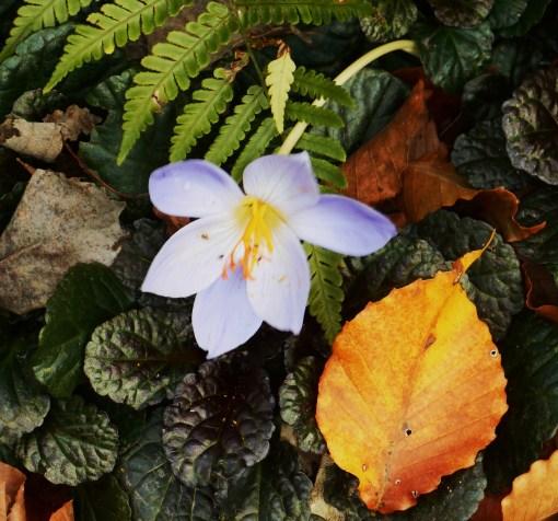 october-28-2016-2016-garden-016