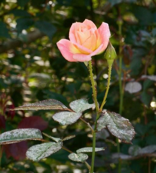 october-3-2016-fall-garden-021