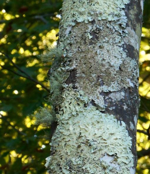 october-9-2016-lichen-001
