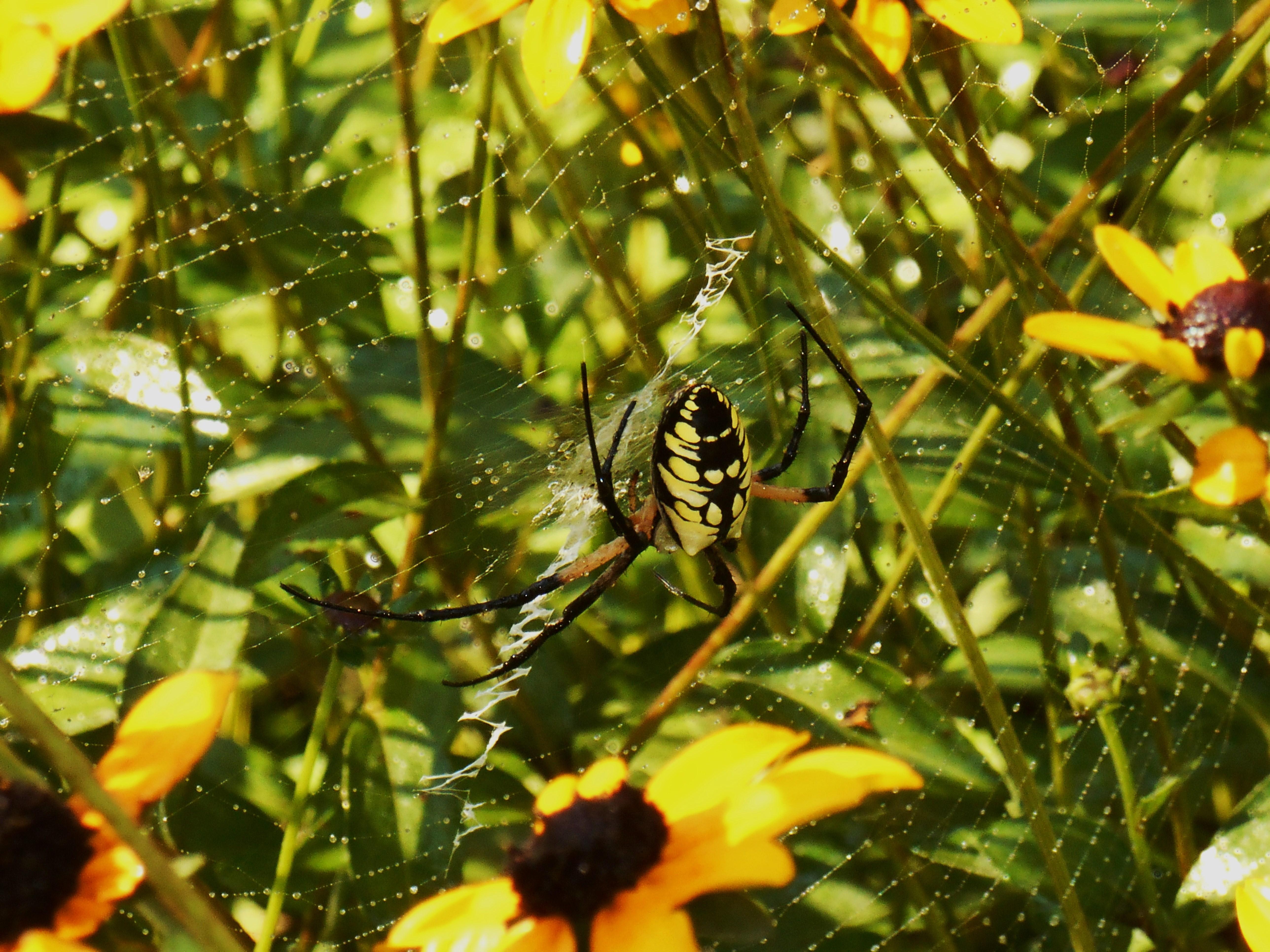 september-6-2016-morning-garden-025