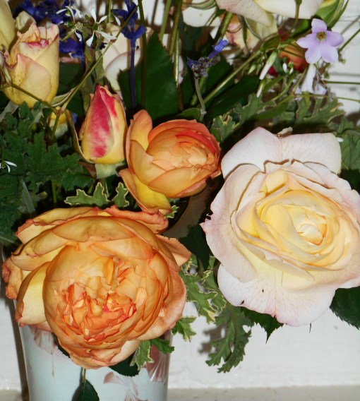 november-21-2016-roses-004