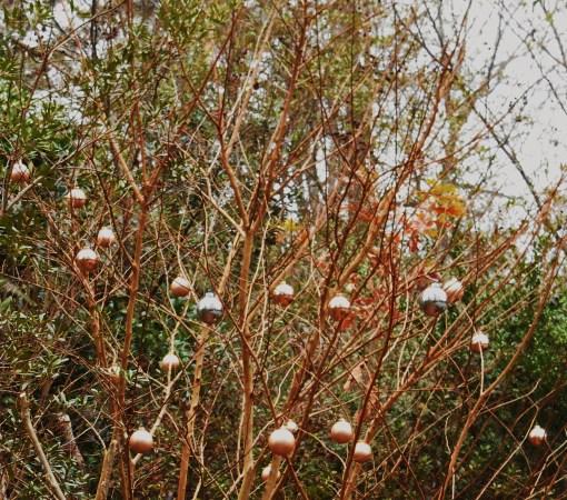 december-18-2016-ornaments-001