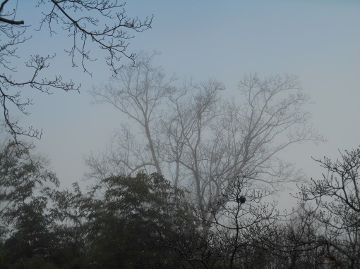 december-25-2016-christmas-foggy-morning-012