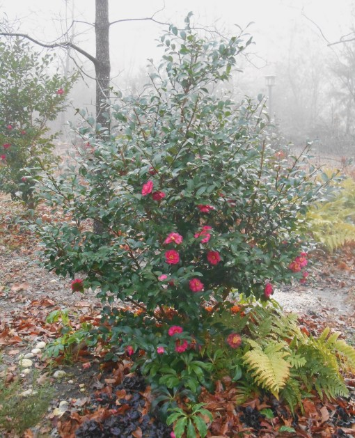 december-25-2016-christmas-foggy-morning-026
