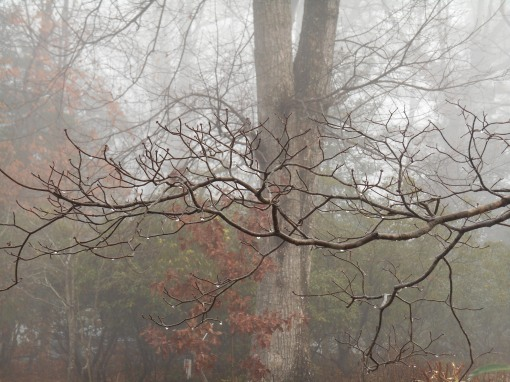 december-25-2016-christmas-foggy-morning-028