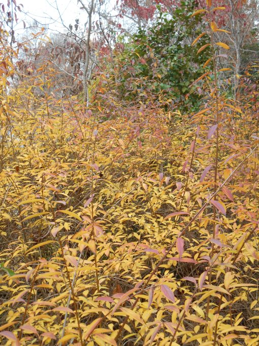 november-30-2016-autumn-garden-001