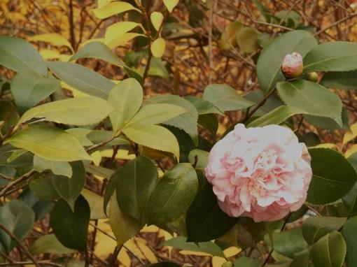 november-30-2016-autumn-garden-010