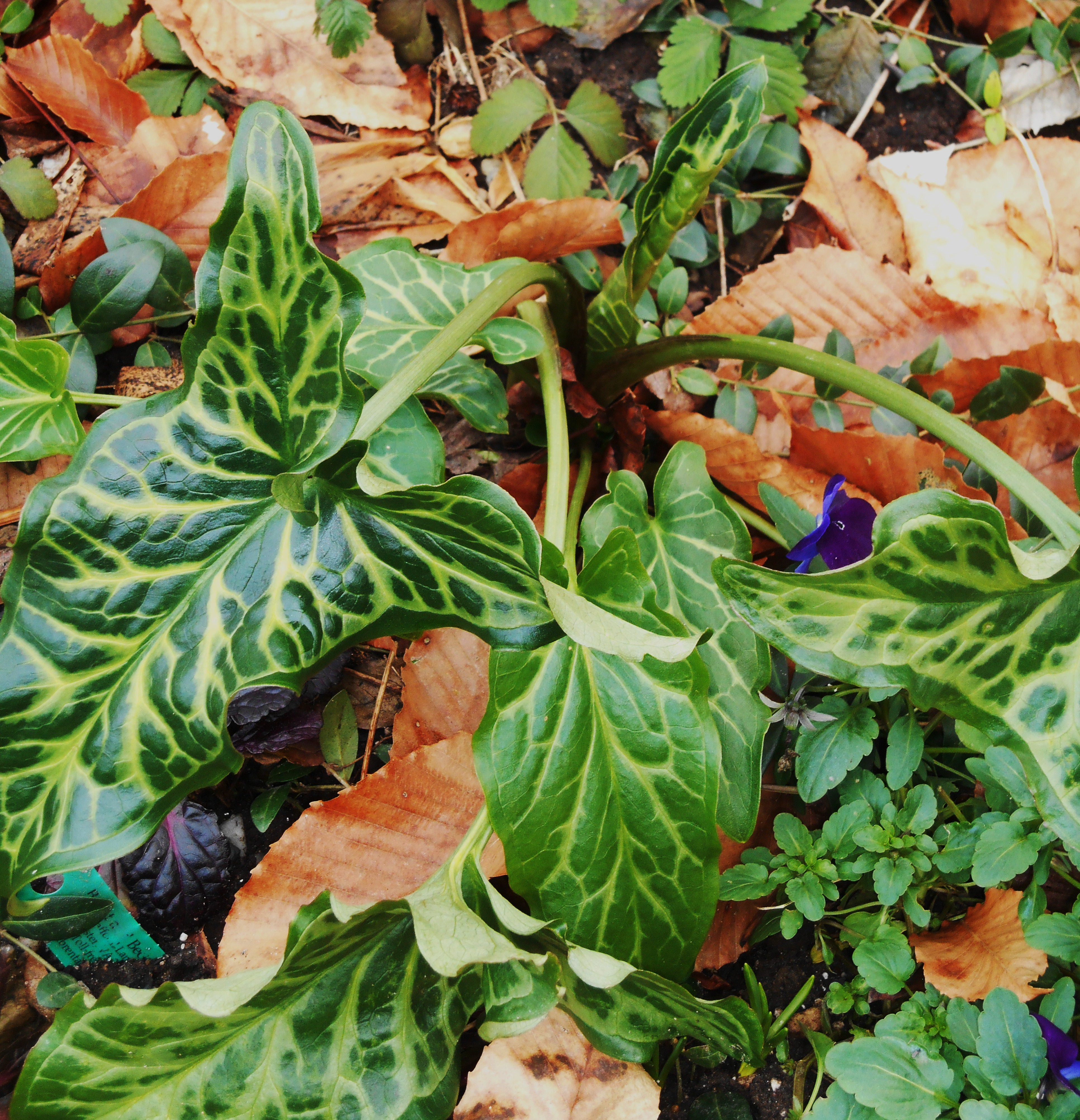 january-4-2016-winter-planting-005
