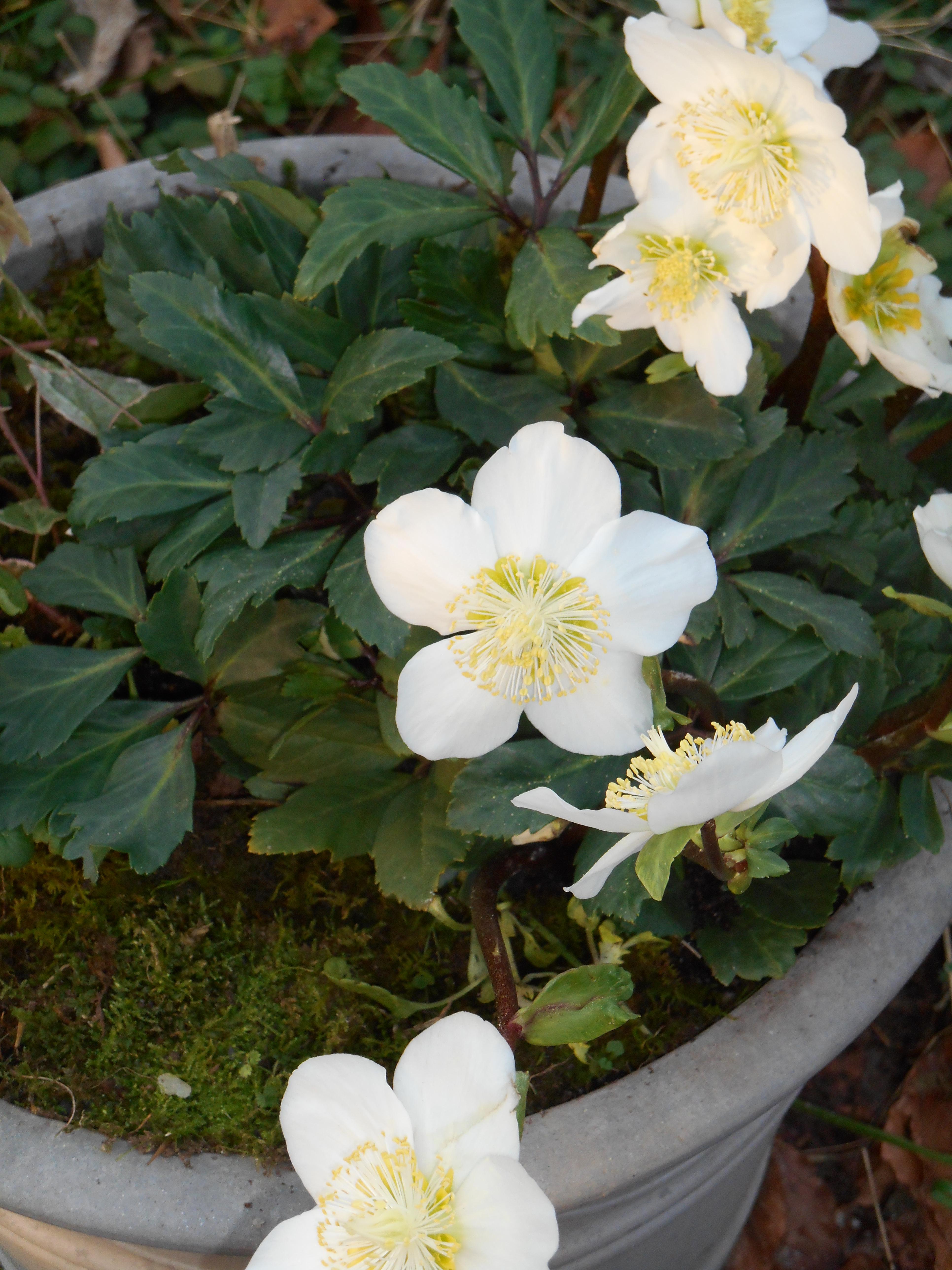january-4-2016-winter-planting-020