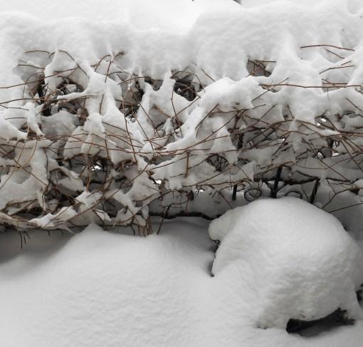 january-7-2017-snow-010