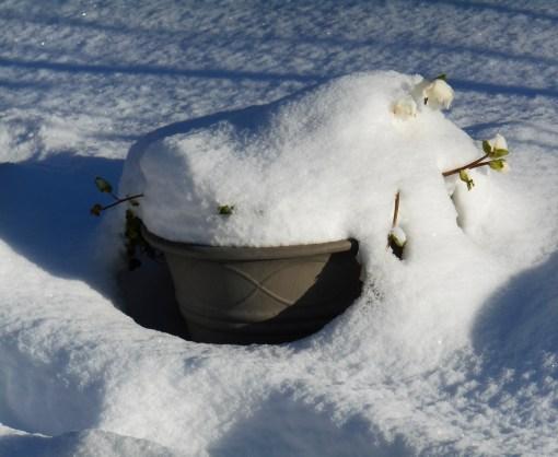 january-8-2016-snow-beauty-013