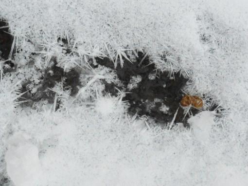 january-9-2017-snow-and-ice-041