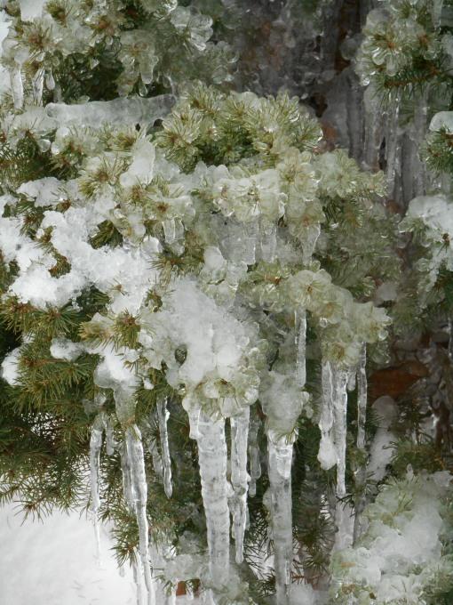 january-9-2017-snow-and-ice-066