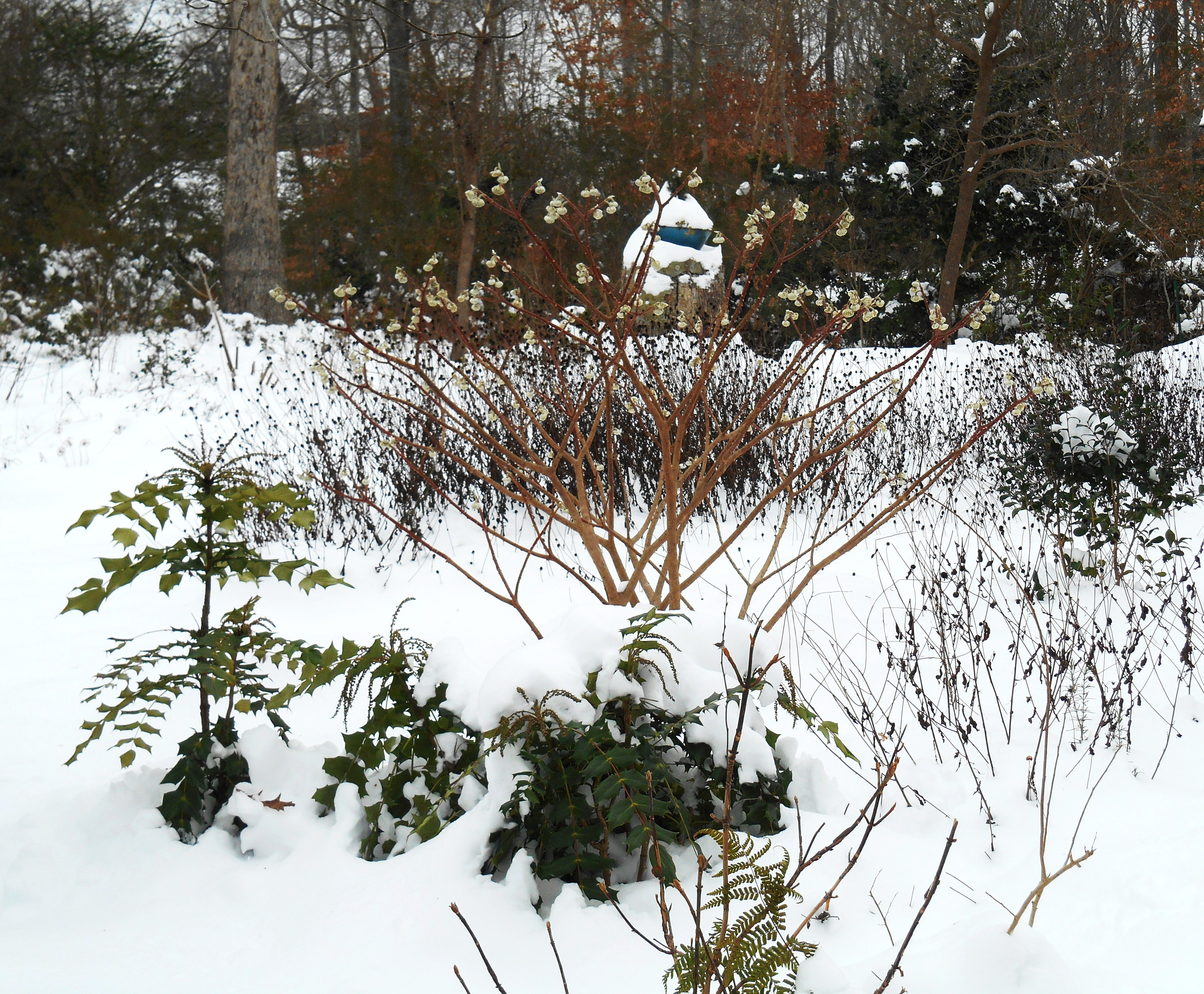 January 9, when we had more than 10 inches of snow in our garden.