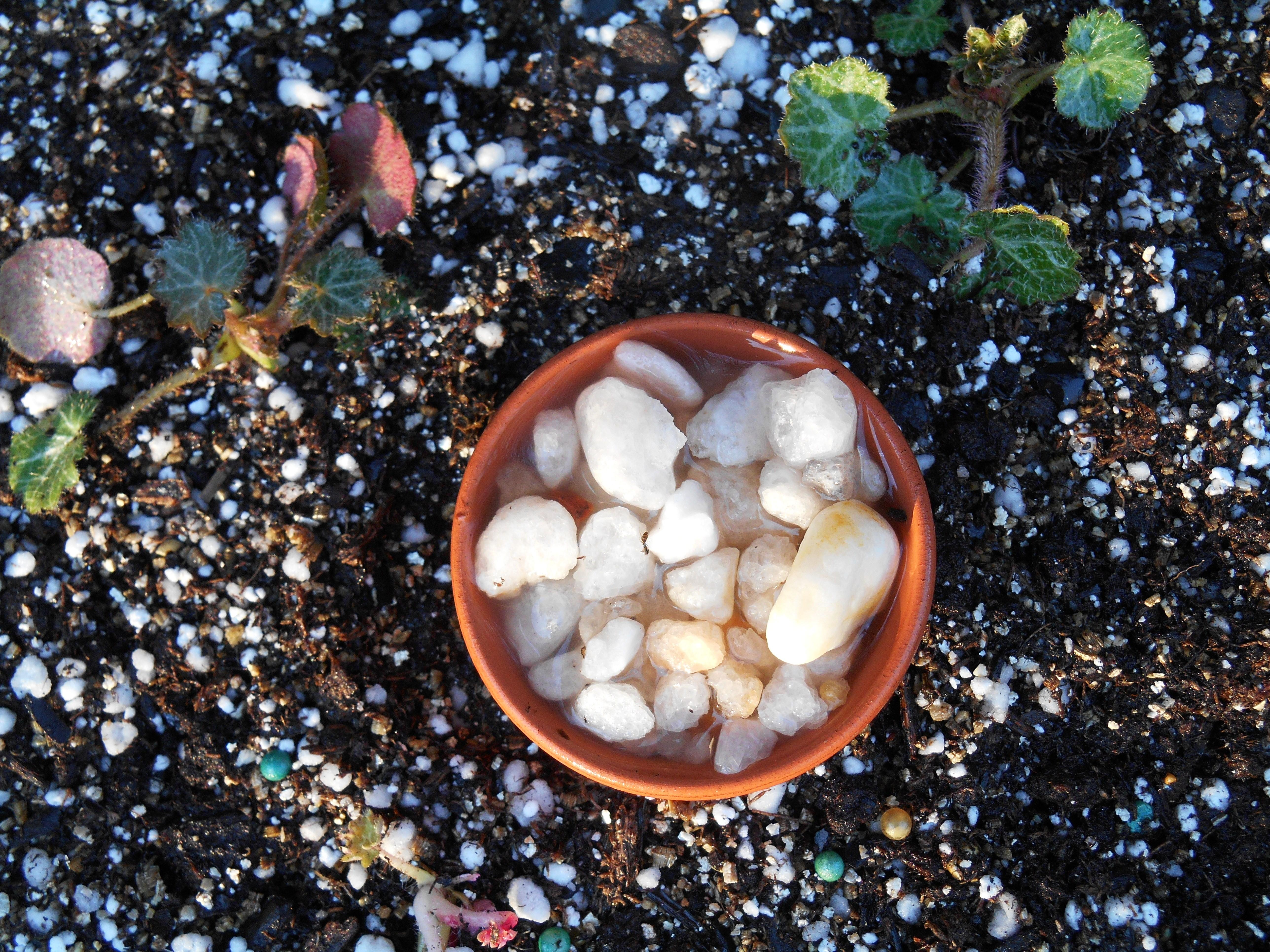 february-23-2017-potting-024