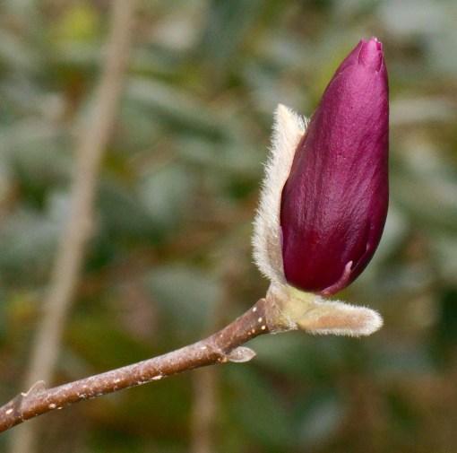 february-28-2017-magnolia-007
