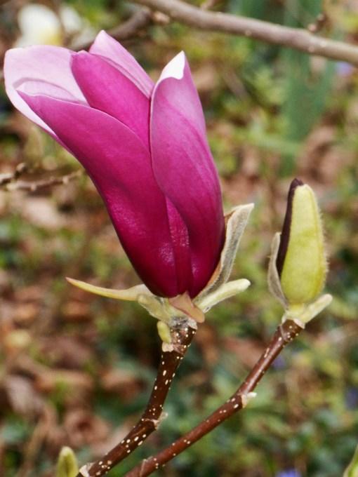 february-28-2017-magnolia-025