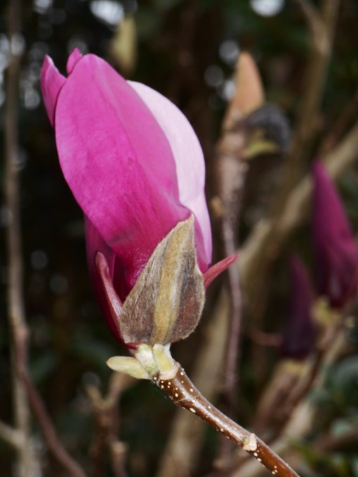 february-28-2017-magnolia-029