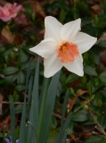 february-28-2017-magnolia-032