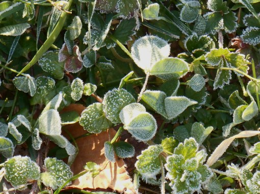 march-5-2017-frost-in-sunlight-027