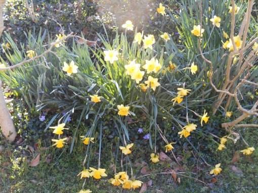 march-5-2017-frost-in-sunlight-030