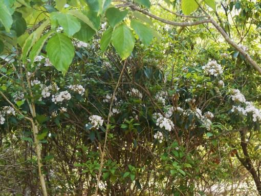 May 11,2014 Bamboo and roses 044